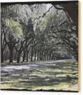 Green Lane With Live Oaks - Black Framing Wood Print