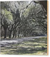 Green Lane With Live Oaks Wood Print