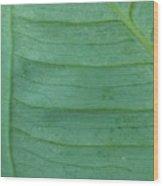 Green Leaf 2 Wood Print