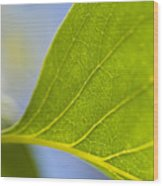 Green Leaf Backlit  Wood Print