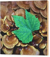 Green Leaf On Fungus Wood Print
