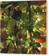 Green Leaf Red Leaf Pano Wood Print