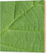 Green Leaf Texture Wood Print