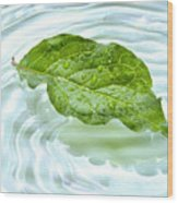 Green Leaf With Water Reflection Wood Print