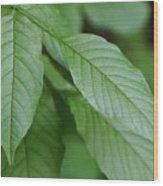 Green Leafs Wood Print