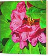 Green Leafs Of Pink Wood Print