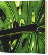 Green Leave With Holes Wood Print