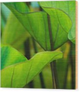 Green Leaves At Cantigny Wood Print