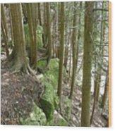 Green Ledge Wood Print