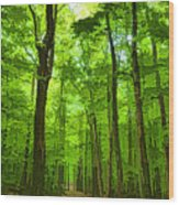 Green Light Harmony - Walking Through The Summer Forest Wood Print
