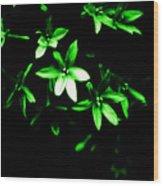 Green Light Star Wood Print