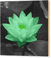 Green Lily Blossom Wood Print