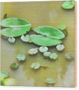 Green Lotus Leaf In The Lake Wood Print