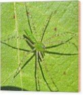 Green Lynx Spider Wood Print