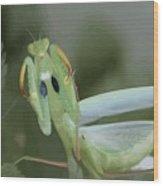 Green Mantis With Garden Background Vector Wood Print