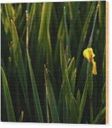 Green Marsh Grass At Sunrise On Lake Cassidy  Wood Print
