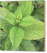Green Mint Leaves Wood Print