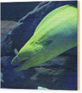 Green Moray Eel Wood Print