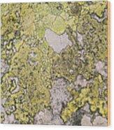 Green Moss On Rock Pattern Wood Print