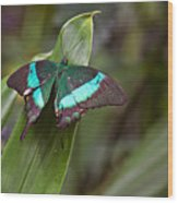 Green Moss Peacock Butterfly Wood Print