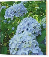 Green Nature Landscape Art Prints Blue Hydrangeas Flowers Wood Print
