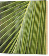 Green Palm Leaf Wood Print