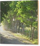 Green Path Wood Print by Barbara Marcus