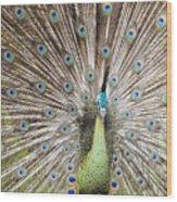 Green Peacock Wood Print