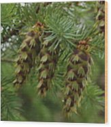Green Pine Cones Wood Print