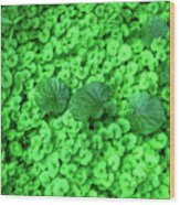 Green Plants Wood Print