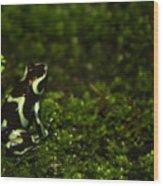 Green Poison Dart Frog Wood Print