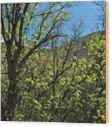 Green Reach Wood Print