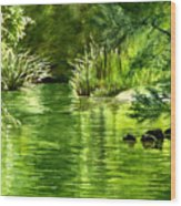Green Reflections With Sunlit Grass Wood Print