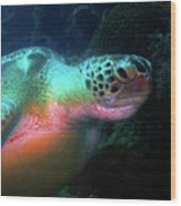 Green Sea Turtle 1 Wood Print