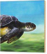 Green Sea Turtle 2 Wood Print