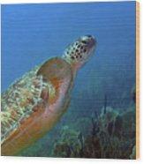 Green Sea Turtle 4 Wood Print