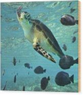 Green Sea Turtle Balicasag Island Wood Print