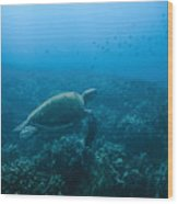 Green Sea Turtle Swimming Over Coral Wood Print