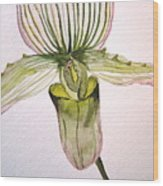 Green Slipper Orchid Wood Print
