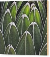 Green Spines Wood Print