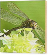 Green Spotted Dragonfly 2 Wood Print