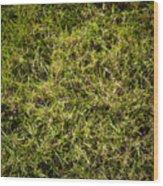 Green Square Wood Print