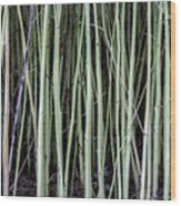 Green Sticks Wood Print
