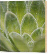 Green Succulent  Wood Print