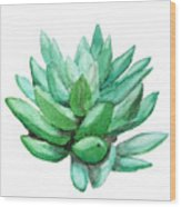 Green Succulent  Wood Print