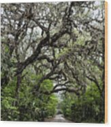 Green Swamp Oak Bower Wood Print