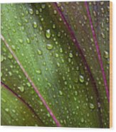 Green Ti Leaves Wood Print