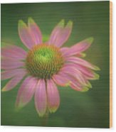 Green Tipped Coneflower Wood Print