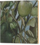Green Tomatoes On The Vine Wood Print