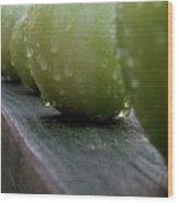Green Tomato's Wood Print